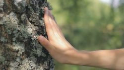 hand touching a tree